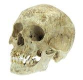 Ludzka czaszka odizolowywająca na bielu Fotografia Stock