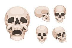 Ludzka czaszka przy różnymi stronami Wektorowi monochromów obrazki royalty ilustracja