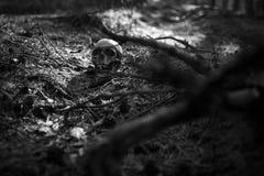 Ludzka czaszka w lesie na ziemi blisko drzewnego bagażnika kropiącego z sosnowymi igłami i iluminującego promieniem światło, obraz royalty free