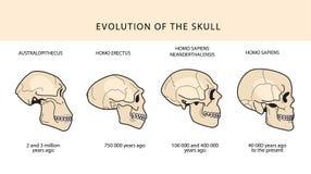 Ludzka ewolucja tekst Z datowanie I czaszka ilustracja wektor