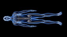 Ludzka Męska anatomii 3D animaci biologii nauki technologia royalty ilustracja