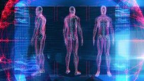 Ludzka Męska anatomii 3D animaci biologii nauki technologia ilustracja wektor