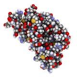 Ludzka prion proteina, chemiczna struktura. (hPrP) Kojarzący z Zdjęcia Royalty Free