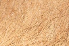 Ludzka skóra zdjęcia stock