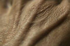 ludzka skóra obrazy stock