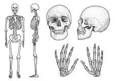 Ludzka zredukowana inkasowa ilustracja, rysunek, rytownictwo, atrament, kreskowa sztuka, wektor ilustracja wektor