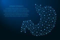 Ludzki żołądek, zdrowy ludzki wewnętrzny przetrawienie organ robić punktami i linie, poligonalna wireframe siatka, niska poli- il ilustracji
