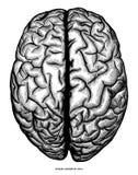 Ludzki cerebrum odgórnego widoku ręki remisu rytownictwa rocznika klamerki sztuki iso ilustracji