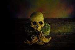 Ludzki czaszek wciąż życie Zdjęcie Stock