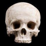 Ludzki czaszka model Zdjęcie Stock