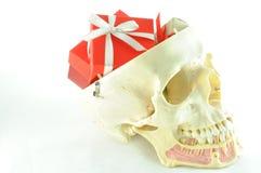 Ludzki czaszki anatomii model Fotografia Royalty Free