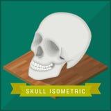 Ludzki czaszki mieszkanie isometric cranium ilustracja wektor