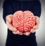 Ludzki gumowy mózg między rękami Obrazy Stock