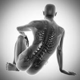 Ludzki kości prześwietlenia obrazu cyfrowego wizerunek Obraz Royalty Free