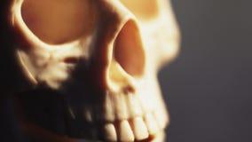 Ludzki kościec i czaszka w górę zbiory wideo