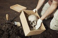 Ludzki kościec znajdujący i pakujący archeologiem na lokaci - czaszka - Zdjęcie Royalty Free