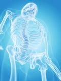 Ludzki kościec - thorax Obrazy Royalty Free