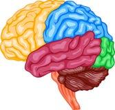 Ludzki mózg ilustracja wektor