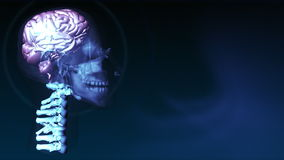 Ludzki Mózg 4 ilustracja wektor