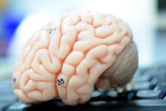 Ludzki mózg Fotografia Royalty Free