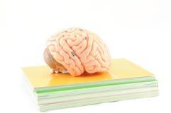 Ludzki mózg Obrazy Stock