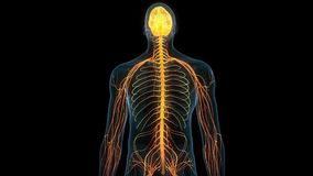 Ludzki mózg royalty ilustracja