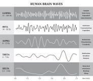 Ludzki Mózg fala diagram, mapa, ilustracja/ Zdjęcia Stock