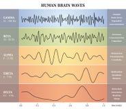 Ludzki Mózg fala diagram, mapa, ilustracja/ Obrazy Royalty Free