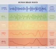 Ludzki Mózg fala diagram, mapa, ilustracja/ ilustracji