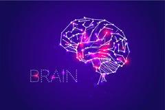 Ludzki mózg i swój potencjały royalty ilustracja