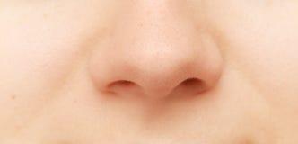 Ludzki nos Obrazy Stock