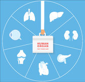 Ludzki organ dla przeszczep ikony setu Przeszczepienie organu pojęcie Ilustracji