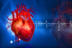 Ludzki serce Zdjęcia Stock