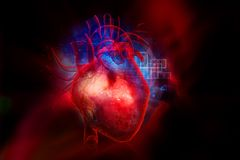 Ludzki serce Zdjęcie Royalty Free