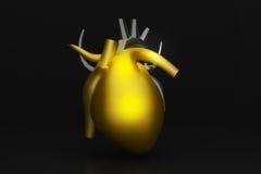 Ludzki serce Obrazy Royalty Free