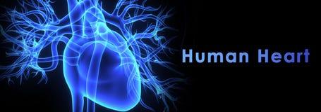Ludzki serce Fotografia Royalty Free