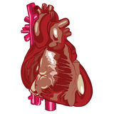 Ludzki serce 03 Royalty Ilustracja