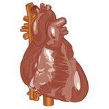 Ludzki serce 04 Zdjęcia Royalty Free