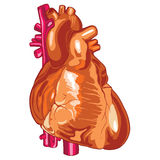 Ludzki serce 02 Ilustracji