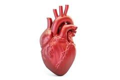 Ludzki serce, 3D rendering Zdjęcie Royalty Free