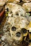 Ludzki skulll w świątyni Zdjęcie Stock