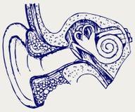 Ludzki wewnętrznego ucho diagram Obrazy Stock