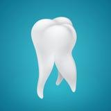Ludzki zdrowy ząb Fotografia Stock