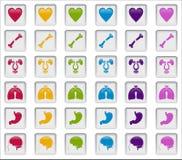 Ludzkich systemów odznak światło Obrazy Stock