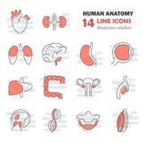 Ludzkie anatomii linii ikony ustawiać Obraz Royalty Free