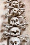 ludzkie czaszki Zdjęcie Royalty Free