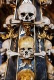 ludzkie czaszki Zdjęcie Stock