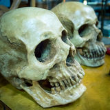 Ludzkie czaszki na stole Zdjęcia Royalty Free