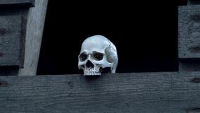 Ludzkie czaszki stoi na drewnianej desce zbiory