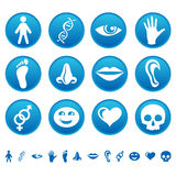 ludzkie ikony Fotografia Stock
